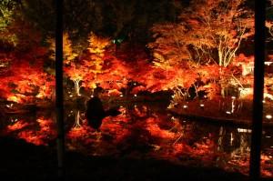 本土寺紅葉ライトアップ